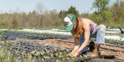 Verbouwing duurzame aardappels